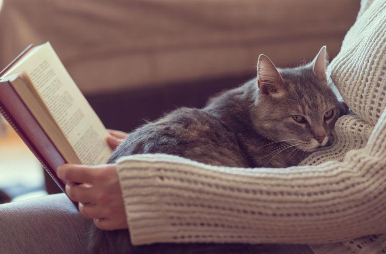 Dormi cu pisica în pat? Ea știe să-ți aline suferința