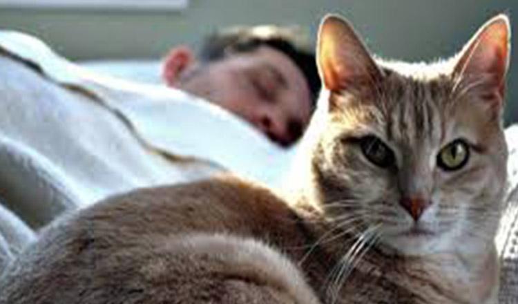 Ce lucruri minunate ți se întâmplă, dacă dormi cu pisica în pat