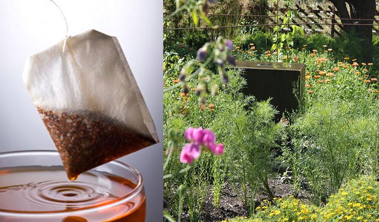 Este de necrezut ce pot face plicurile de ceai folosite în grădină!