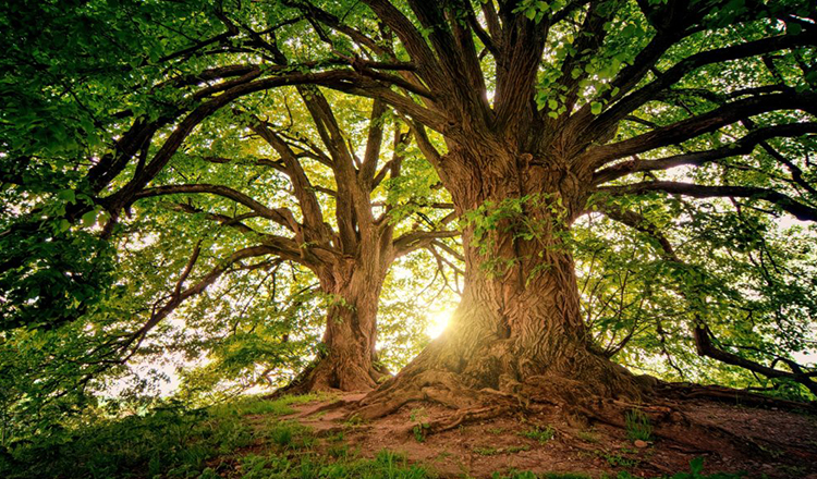 "Copacilor le ""bate inima"".  Au pulsatie in tot trunchiul"